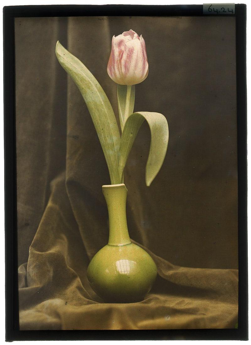 Berend Zweers (1872-1946), zonder titel, 1905-1910, autochroomplaat, 18,0 x 12,9 cm (afm. glasplaten, beeld 17,0 x 12,0 cm), collectie Universiteitsbibliotheek Leiden, inv.nr.